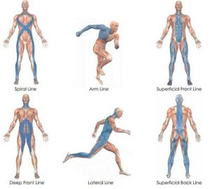 Athletic Performance Academy's myofascial examples