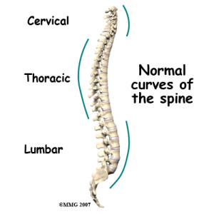 Learn more about the spine on eOrthopod